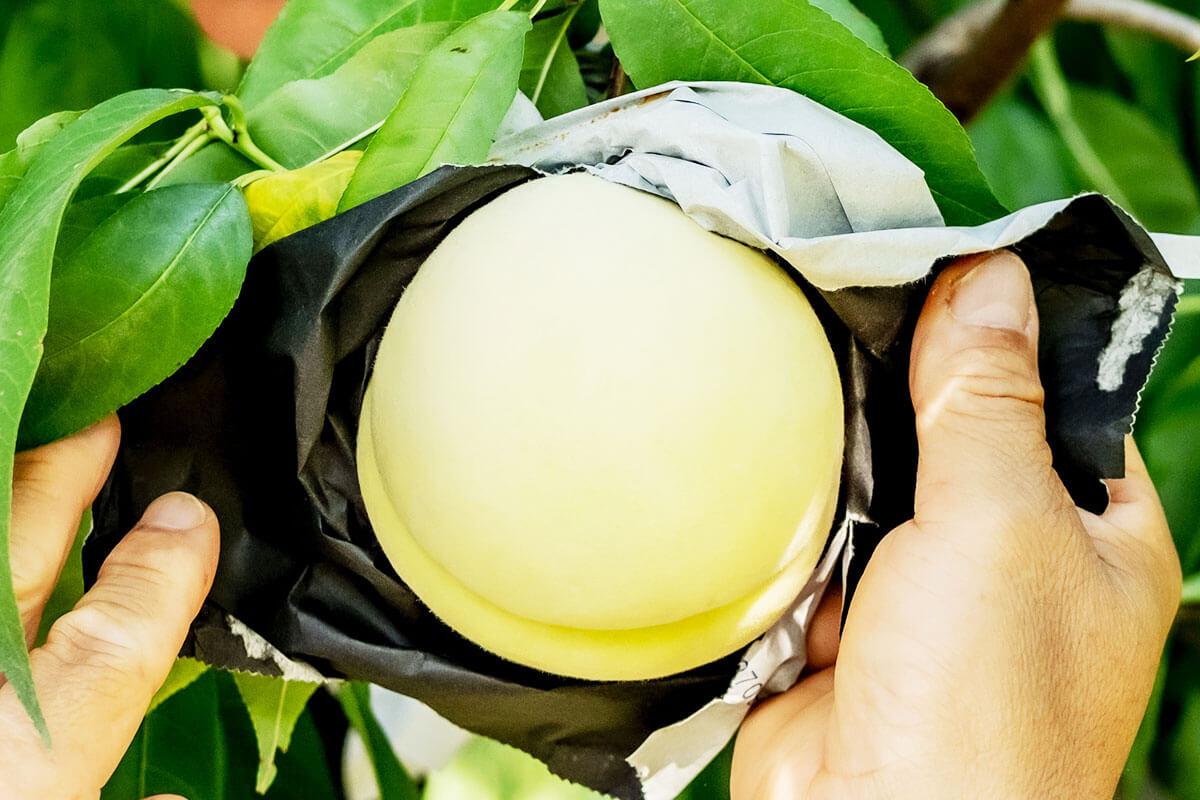 桃と生産者の手