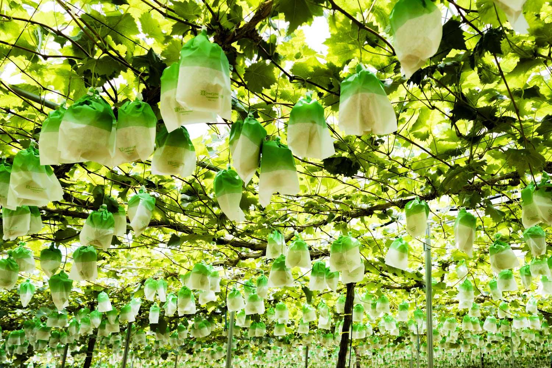 摘穂(てきすい)
